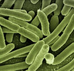 Bakterieninfektion: Zac Efron bei Dreharbeiten erkrankt